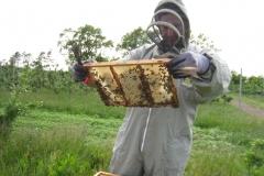 Honning og bier